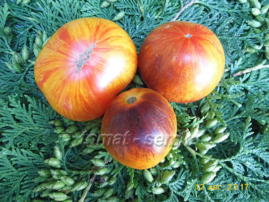помидор мечта алисы фото спелых плодов