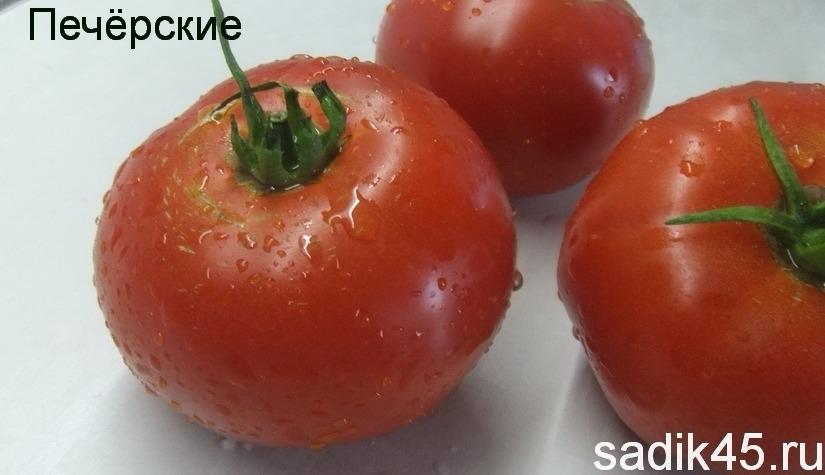 помидоры печерские фото