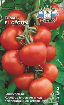 помидоры сестра фото