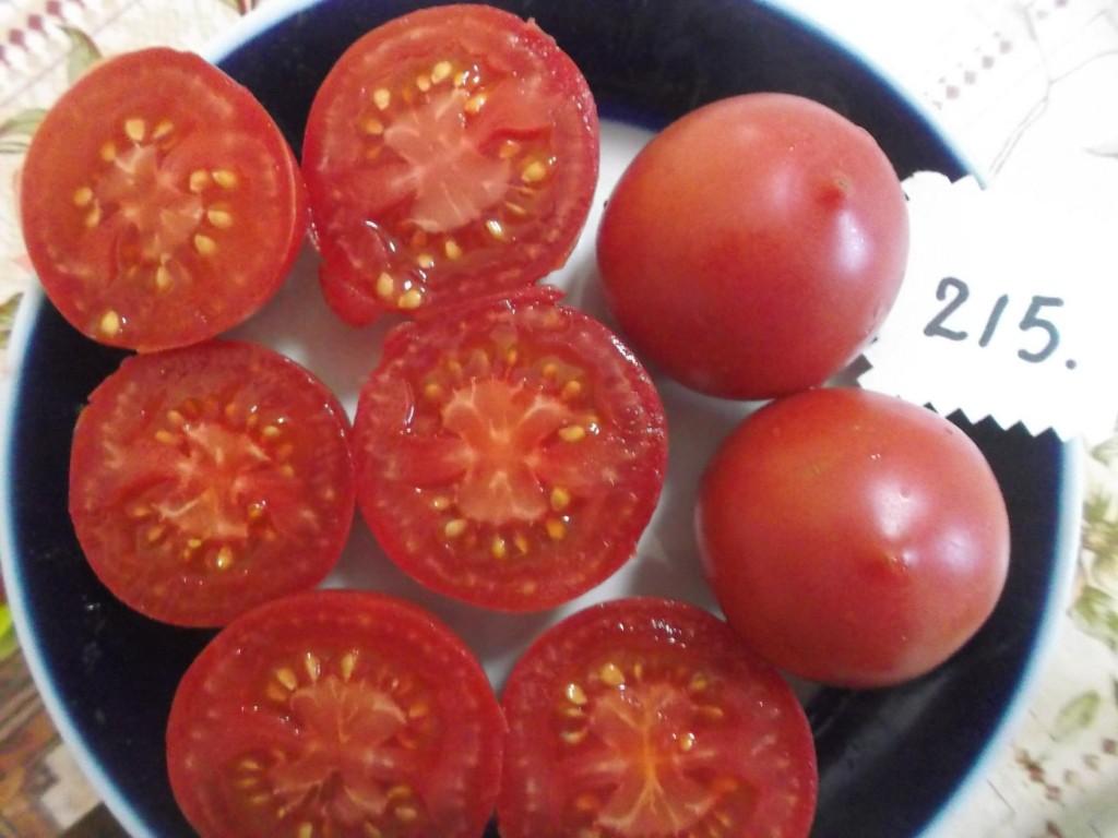 помидоры сызранская пипочка