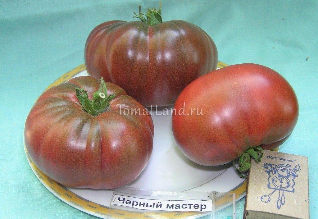 помидоры Черный мастер фото