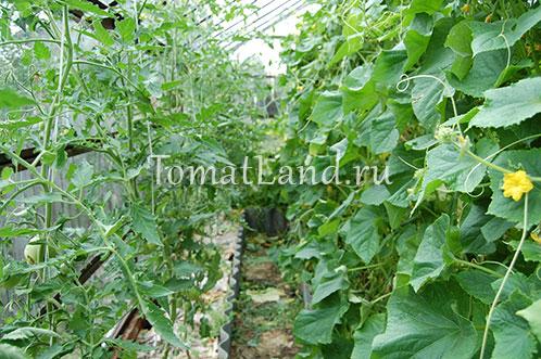 Подкормка помидор чего не хватает томатам комплексное удобрение
