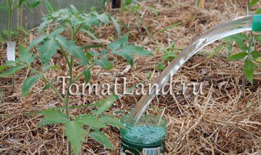 полив помидоров в бутылки