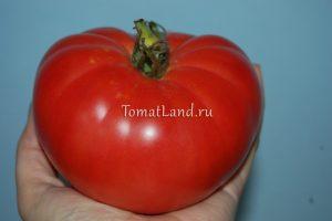 помидоры безразмерный отзывы
