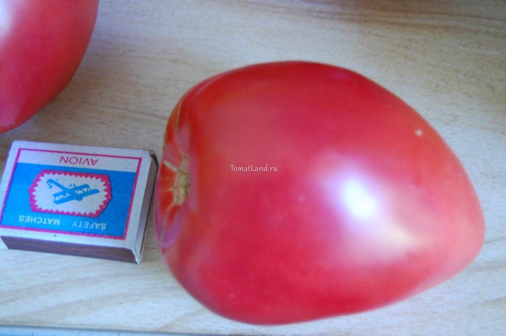 томаты орлиный клюв отзывы