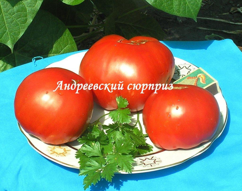 томаты андреевский сюрприз фото характеристика