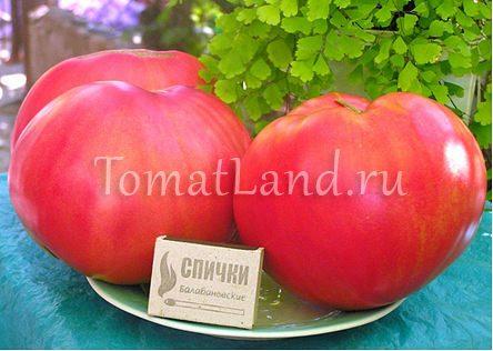 помидоры розовый мед фото спелых плодов