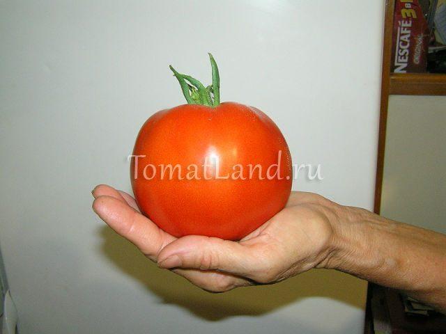 помидоры сахарный бизон фото спелых плодов