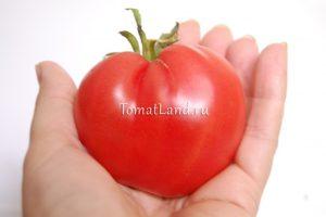 томат немецкая красная клубника отзывы