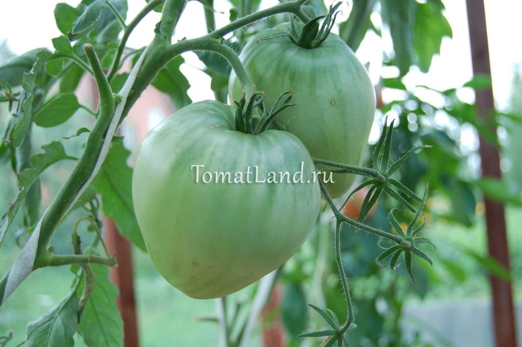 томат китайский розовый