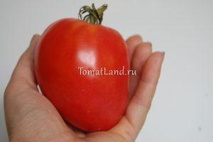 помидор китайский розовый отзывы