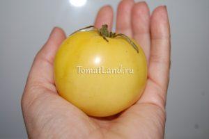 томат в десятку отзывы