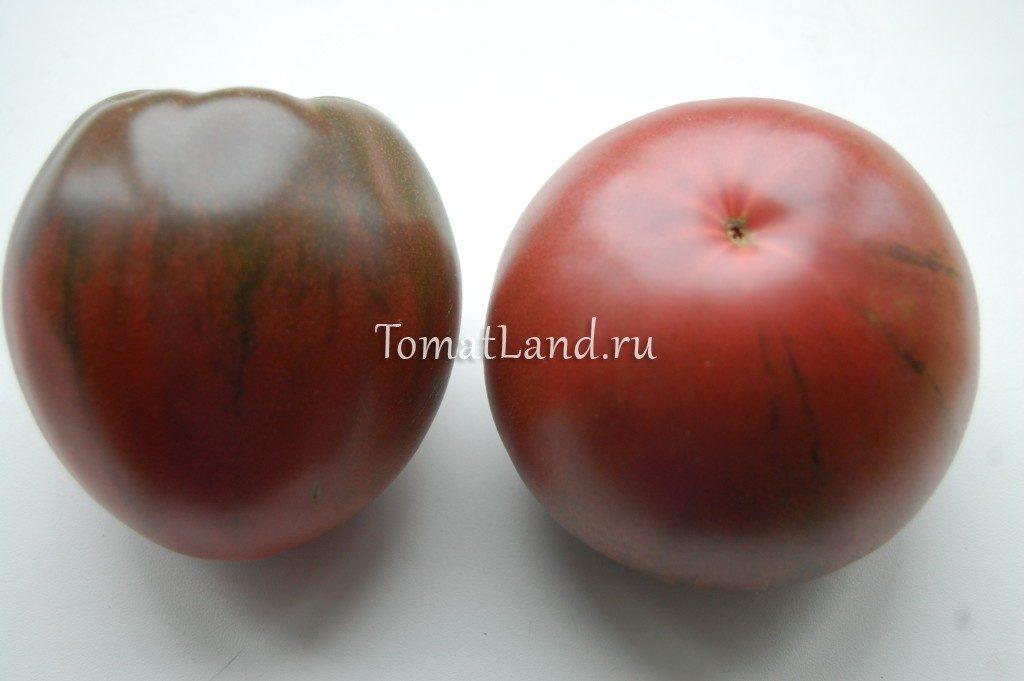 помидор черное сердце бреда фото
