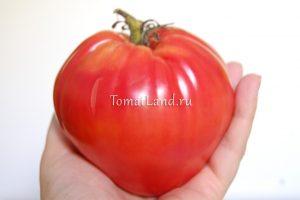 помидоры большая малина отзывы