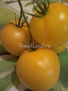 помидоры диоранж фото