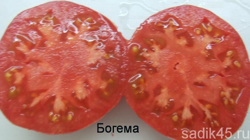 помидоры богема фото в разрезе