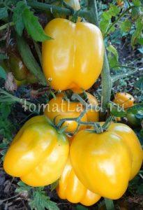 помидоры иллюзия