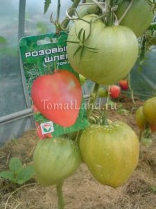 помидоры розовый шлем