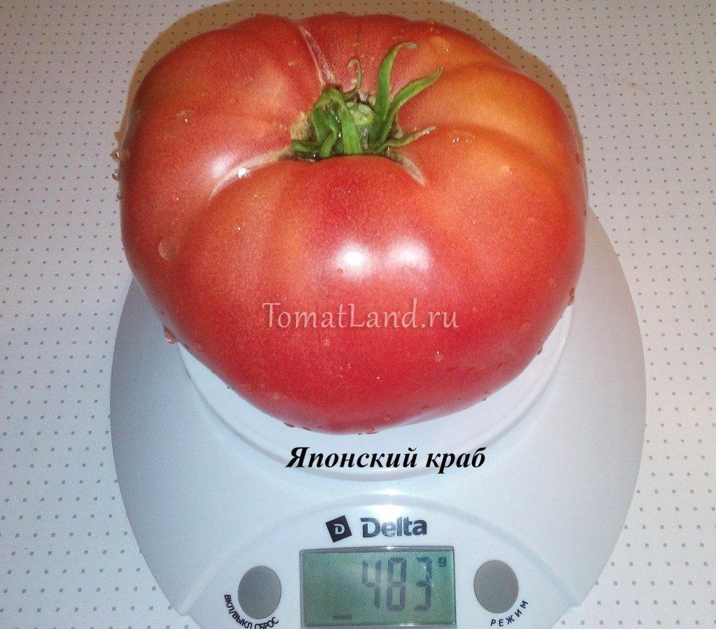 томаты японский краб фото помидор