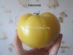 помидоры белые Басинга
