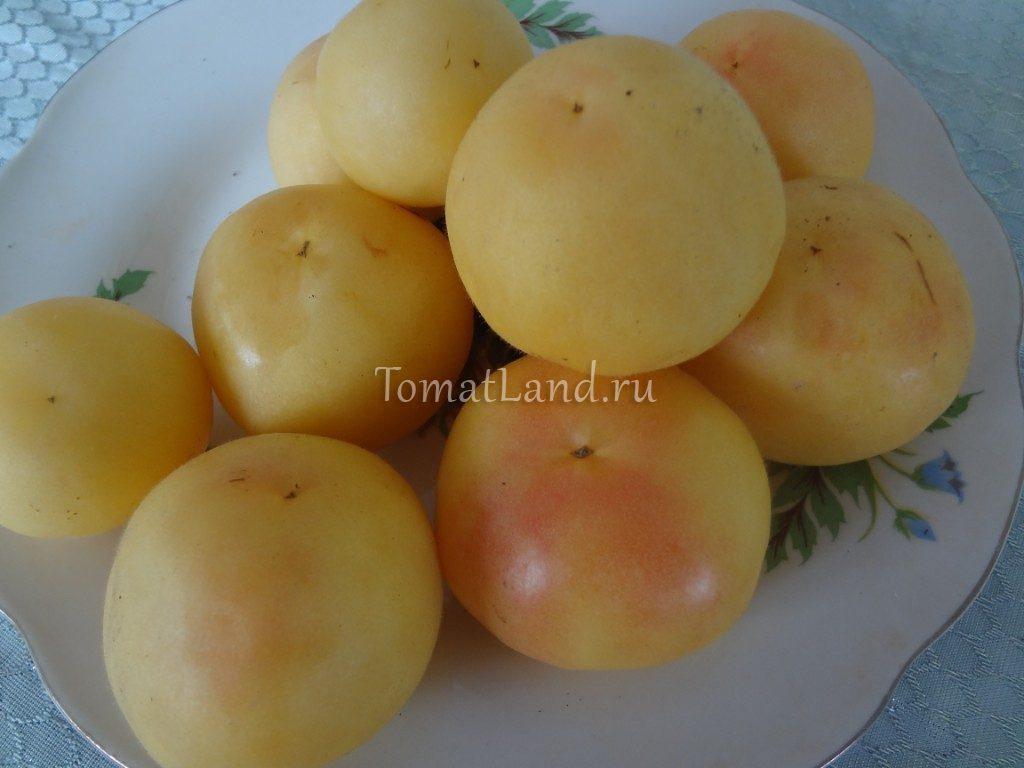 помидоры персик желтый фото спелых плодов
