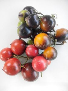 помидоры H-34 отзывы
