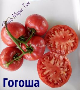 томат сорта Гогоша фото