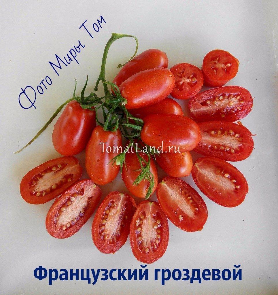 томат французский гроздевой отзывы и фото
