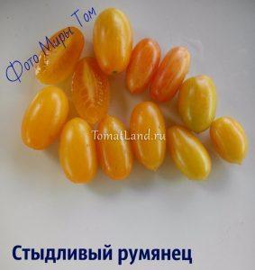 томаты Стыдливый румянец отзывы