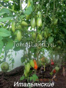 томаты Итальянские отзывы