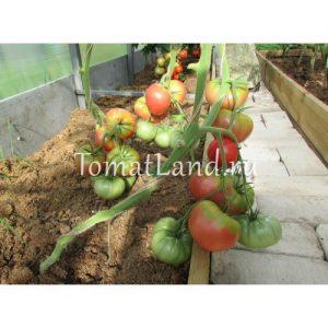 помидоры Камнепад отзывы
