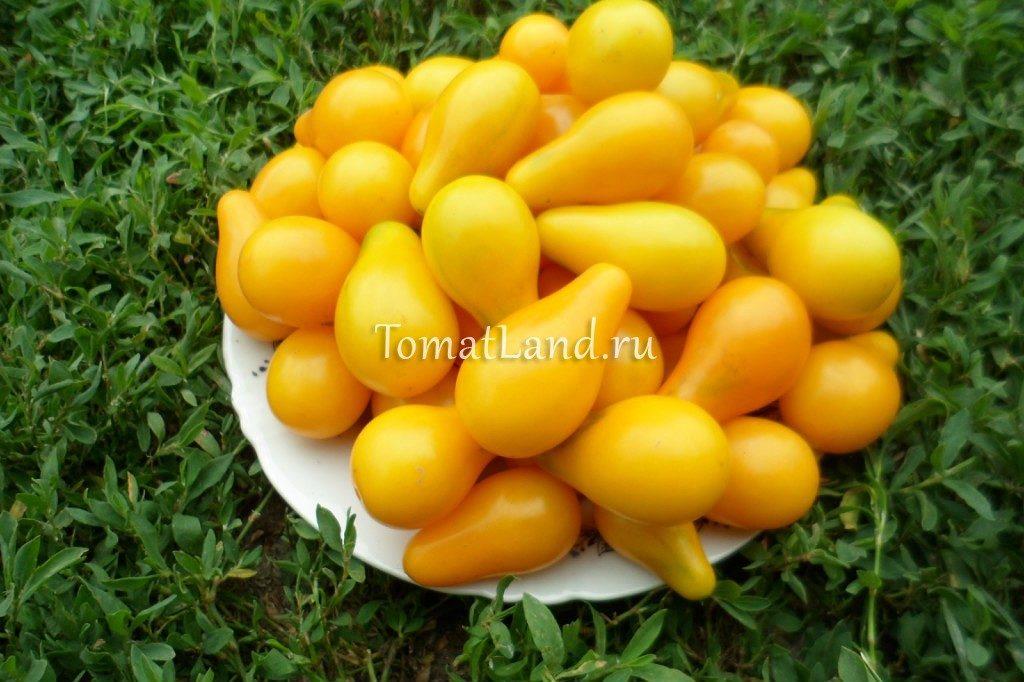 помидоры Китайская груша отзывы