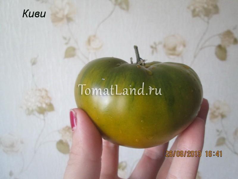 помидор сорт киви фото