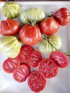 красная груша франков томаты