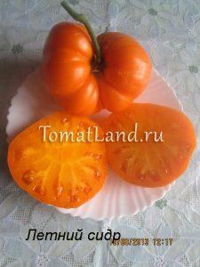 томаты сорта Летний сидр отзывы