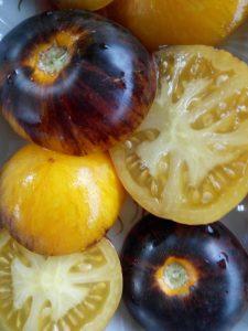 томат полосы былого