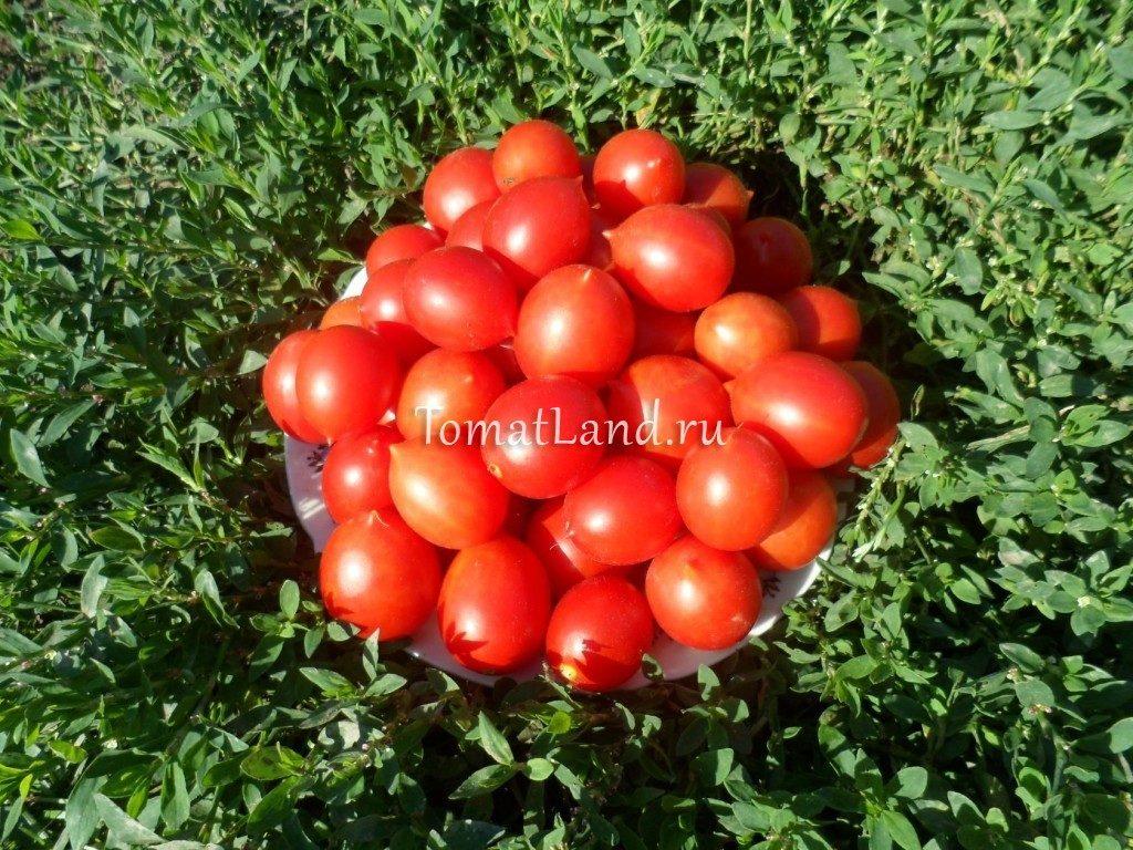 помидоры Принц Боргезе фото