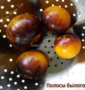 томаты Полосы былого отзывы