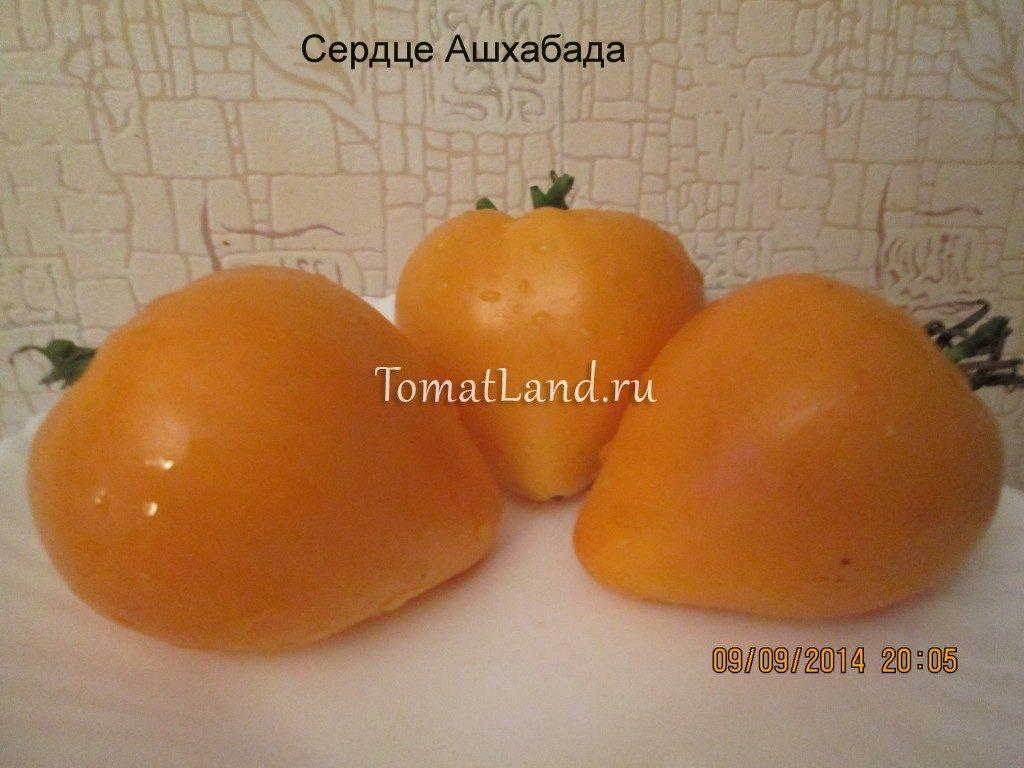 помидоры Сердце Ашхабада отзывы