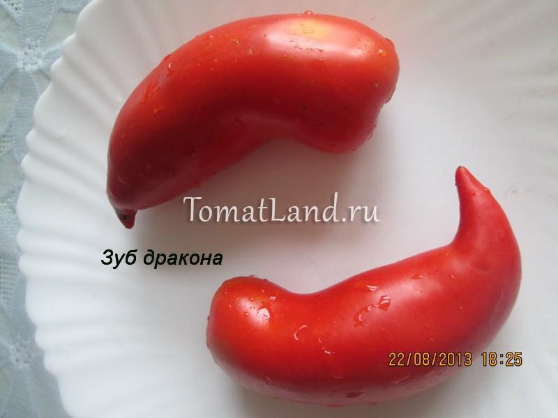 помидоры зуб дракона фото