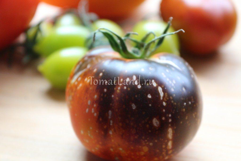 помидоры темная галактика фото спелых плодов