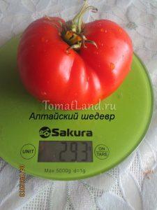 помидоры алтайский шедевр