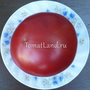 помидоры сорт Авентюняй
