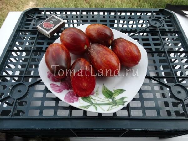 помидоры бой с тенью фото спелых плодов