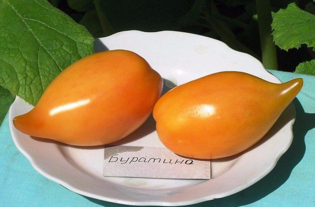 помидоры Буратино фото