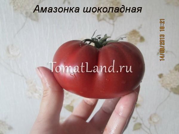 помидоры амазонка шоколадная фото спелых плодов отзывы