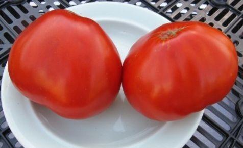 помидоры данко фото отзывы характеристика