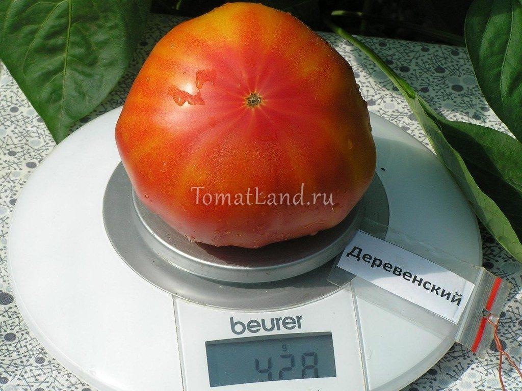 помидор деревенский сорт фото