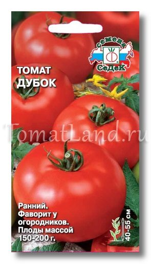 томат дубок фото спелых плодов отзывы