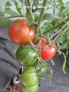 помидоры сорт сладкий розовый корнерос